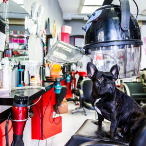 photographe-var-photographie-portrait-commerce-coiffeur-chien-bouledogue-creatif-crau