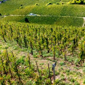 photographe-var-photographie-paysage-reportage-voyage-vignobles-bourgogne