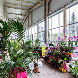 photographie-reportage-entreprise-La-Crau-Jardica-jardinerie-Coopazur